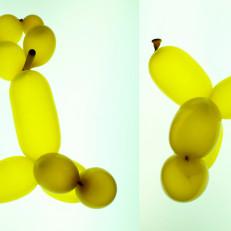 Koiran malliin väännettyjä keltaisia ilmapalloja